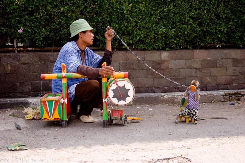 Monkey Performance